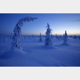 Arbres plaqués par le froid