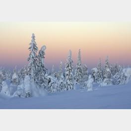 Paysage d'hiver en Finlande