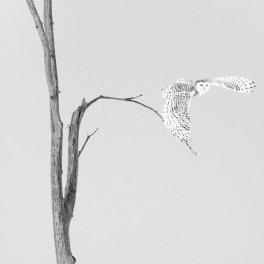 Estampe japonaise  1/15 TIRAGE D'ART