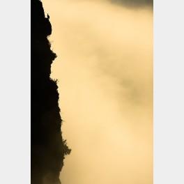 Vautour dans la mer de nuages