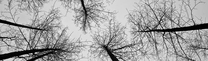 Fleurs et arbres à rêves